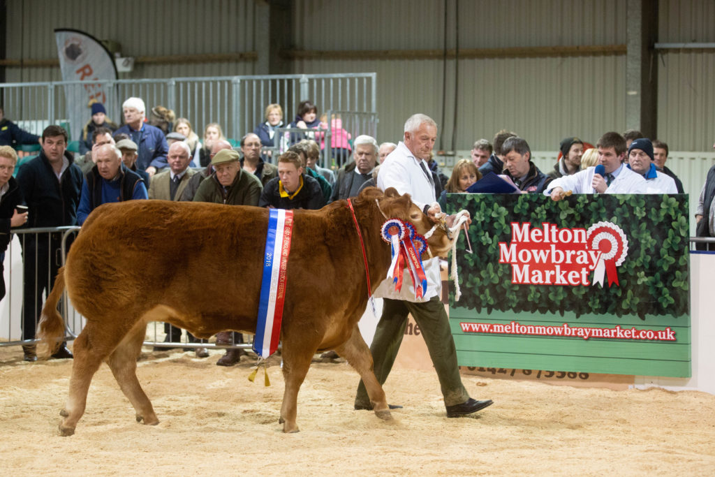 Commercial Cattle Champion