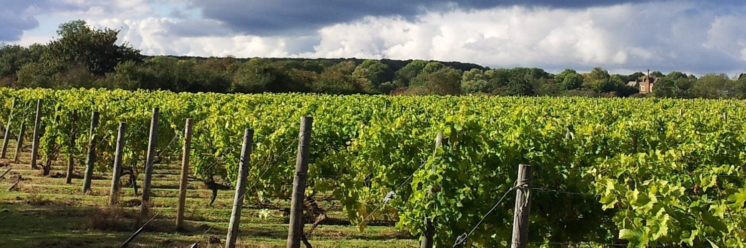 English Wine Week: Warden Abbey Vineyard