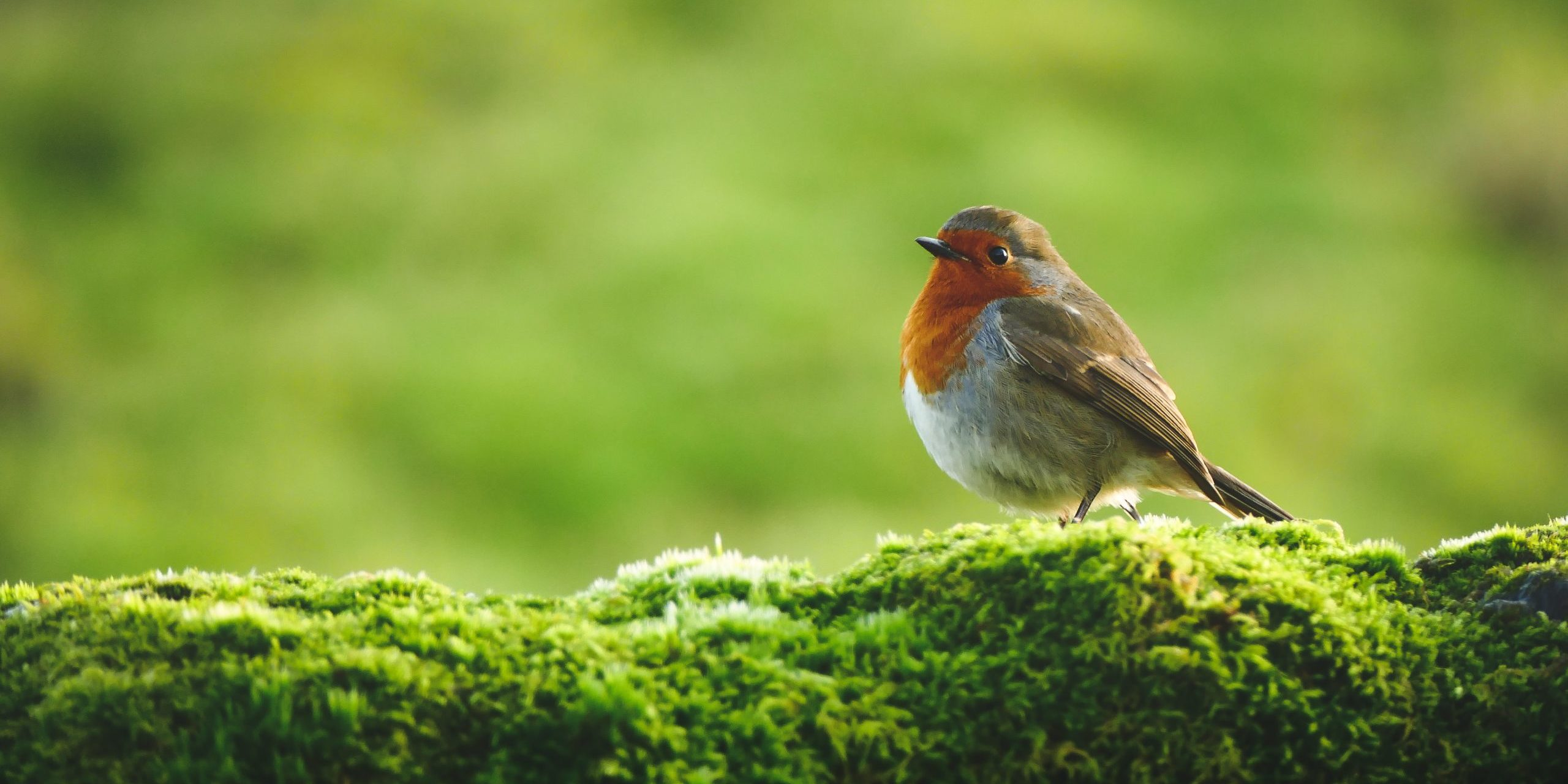 Join in with the RSPB Big Garden Birdwatch 2021